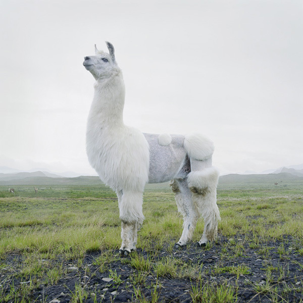 фото диких животных