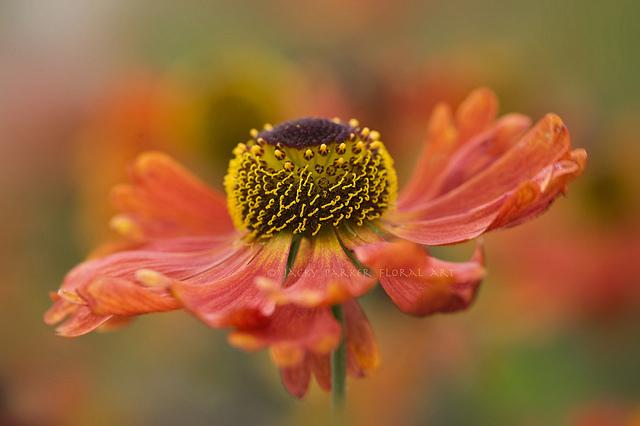 Красивые фотографии цветов от jacky parker