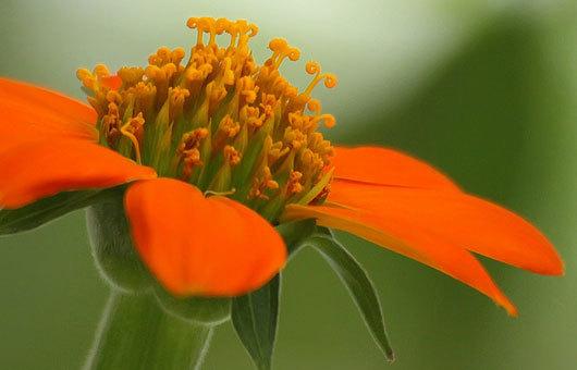 Красивые фотографии цветов от Kim Hojnacki  (1)