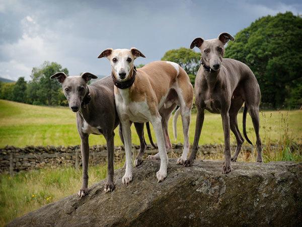 фотограф домашних животных Paul Walker