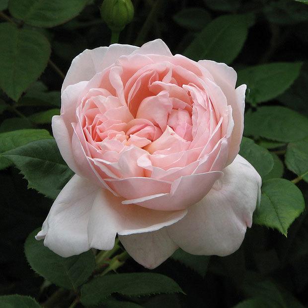японский парк цветов