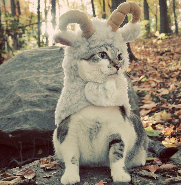 костюм для маленькой собаки в виде овечки от Zack & Zoey
