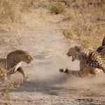 Лучшие фото за январь 2013 по версии National Geographic