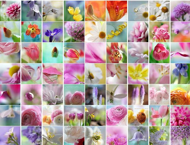 Цветочные фотографии от Aina Apelthun