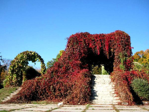 Национальный ботанический сад в Киеве (2)