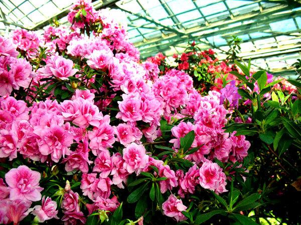 ботанический сад в Киеве (1)