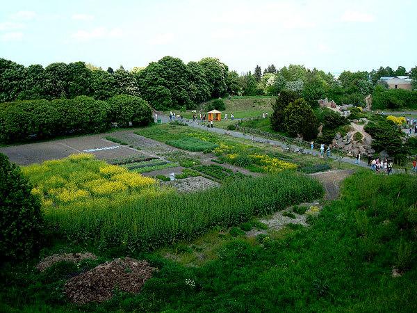 пряные растения в ботсаду