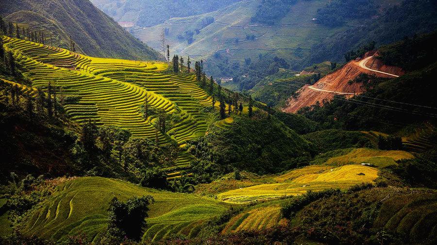 изумрудно-зеленые рисовые поля Вьетнама (1)