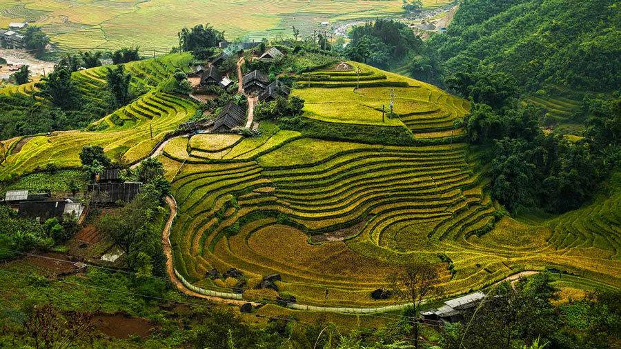 рисовые поля Вьетнама