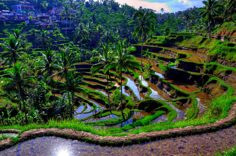 Система орошения рисовых полей на Бали.
