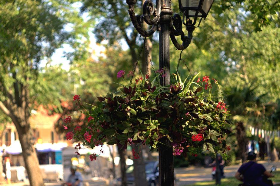 Цветы на улицах Созополя.