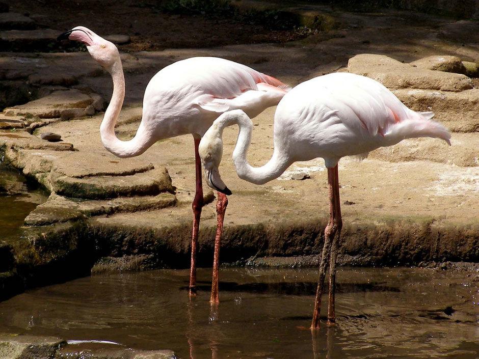 Bali Bird Park розовые фламинго.