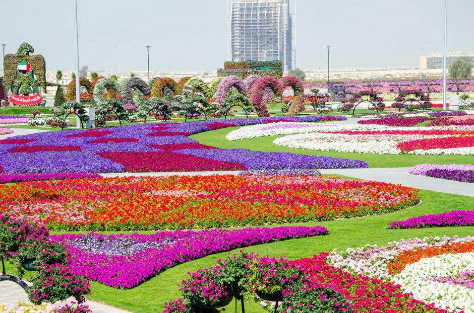 парк цветов в дубае фото (1)