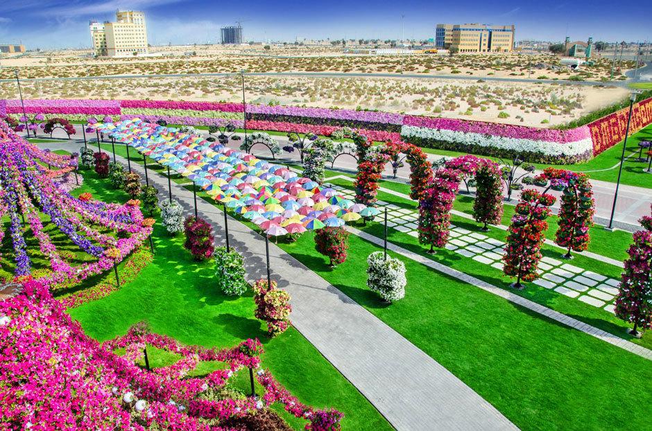 парк цветов в дубае фото (3)