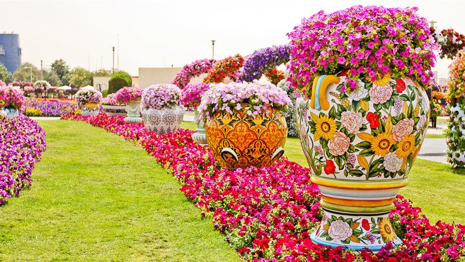 парк цветов в дубае фото (4)