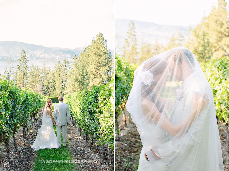 свадьба в винограднике