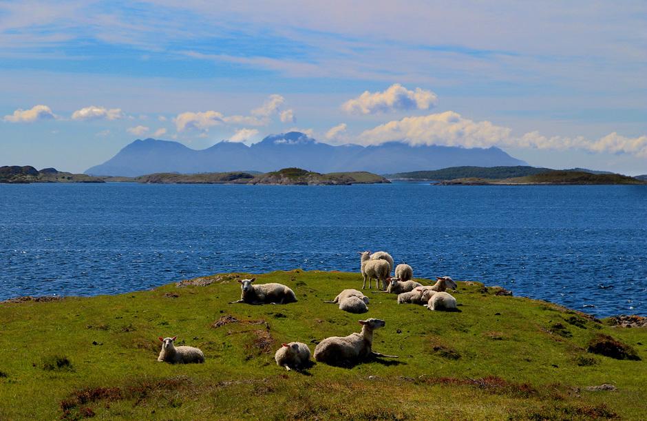 овцы в Норвегии