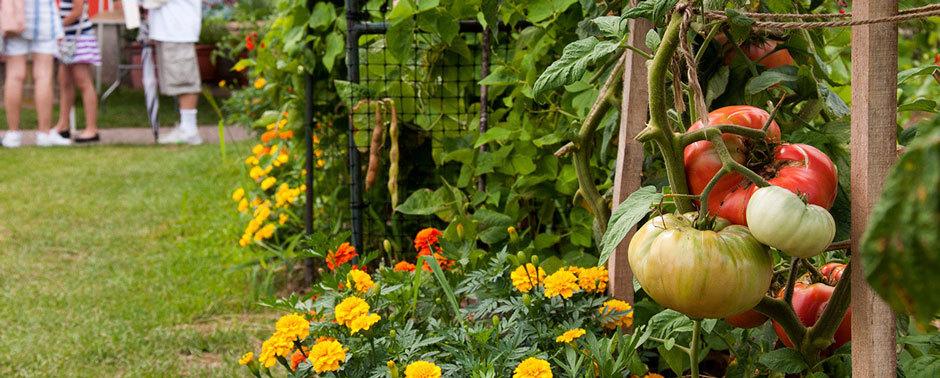 уроки садоводства