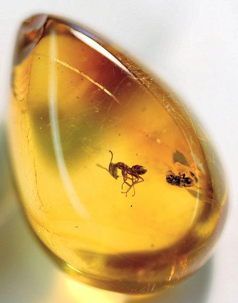 янтарь с насекомым