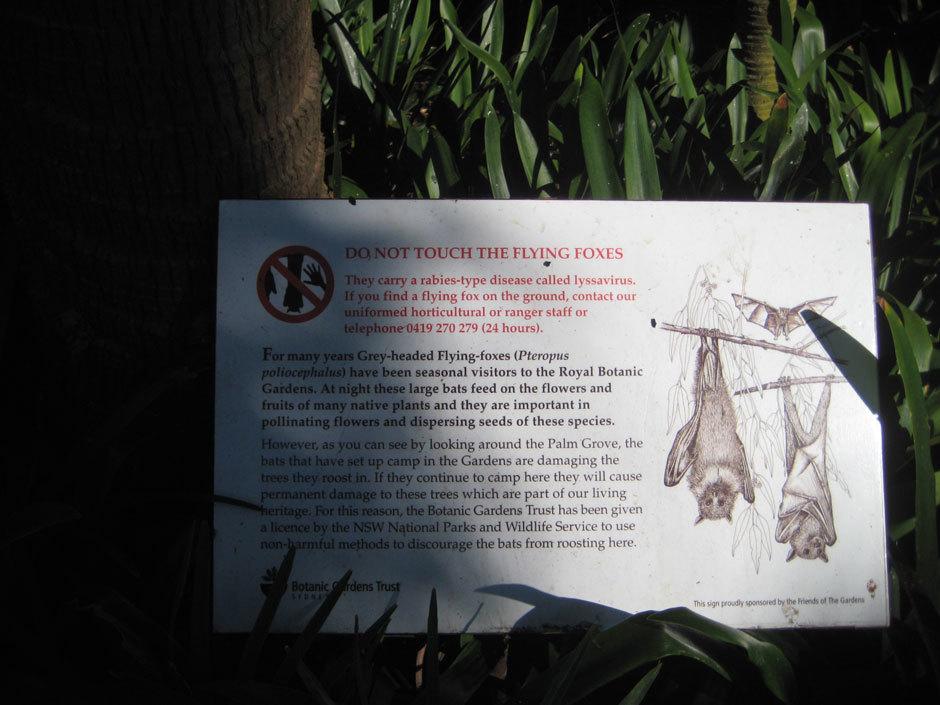 Табличка о летающих лисицах в Королевском Боатническом саду