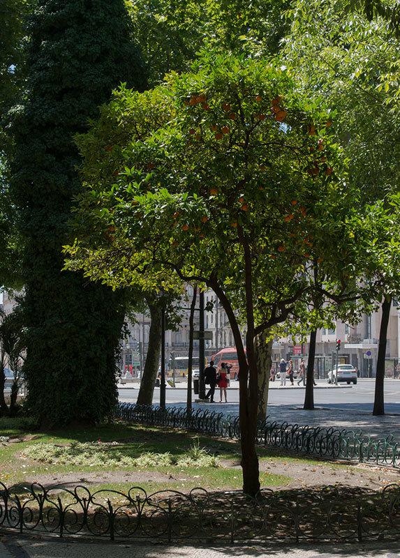 апельсины на проспекте свободы в Лиссабоне (1)