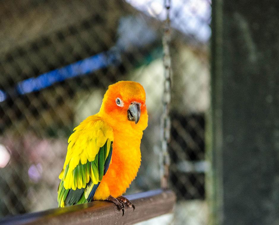 яркий попугай