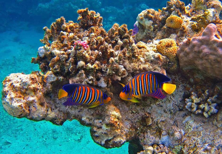 Красное море подводное плавание