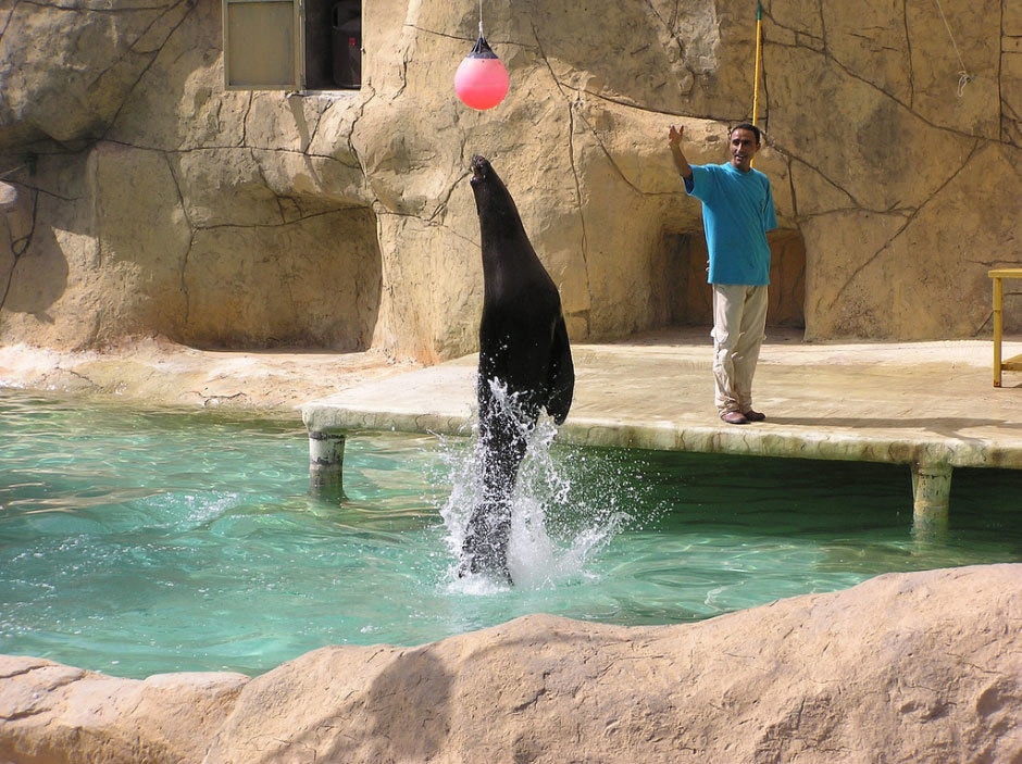дельфинарий в Тунисе (1)