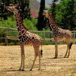 Зоологический парк Фригия в Тунисе