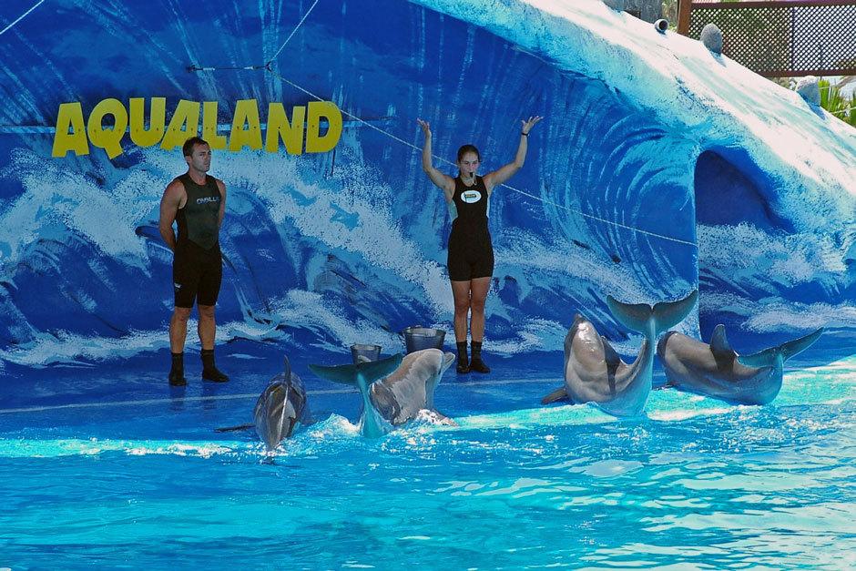 Дельфины, Акваленд на Тенерифе