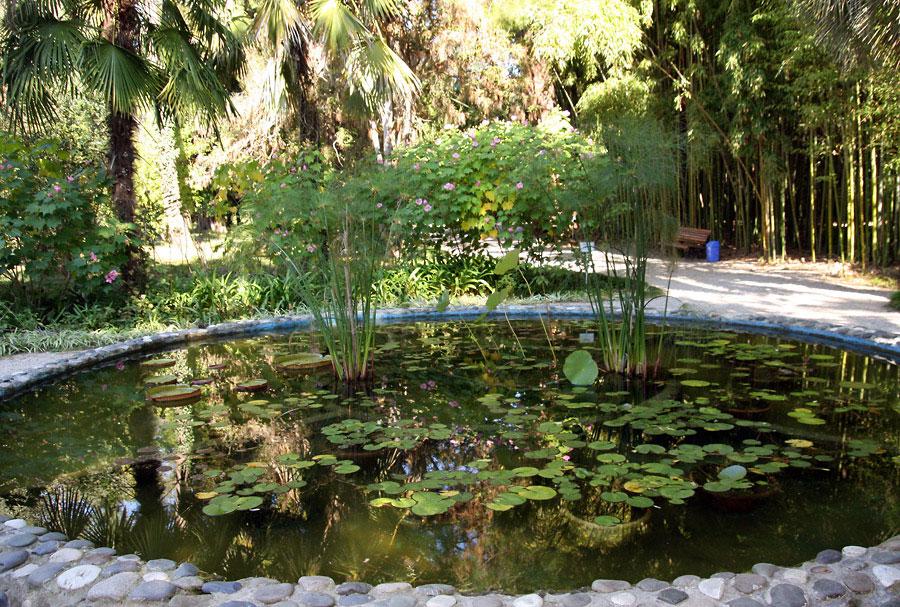 Сухумский ботанический сад пруд