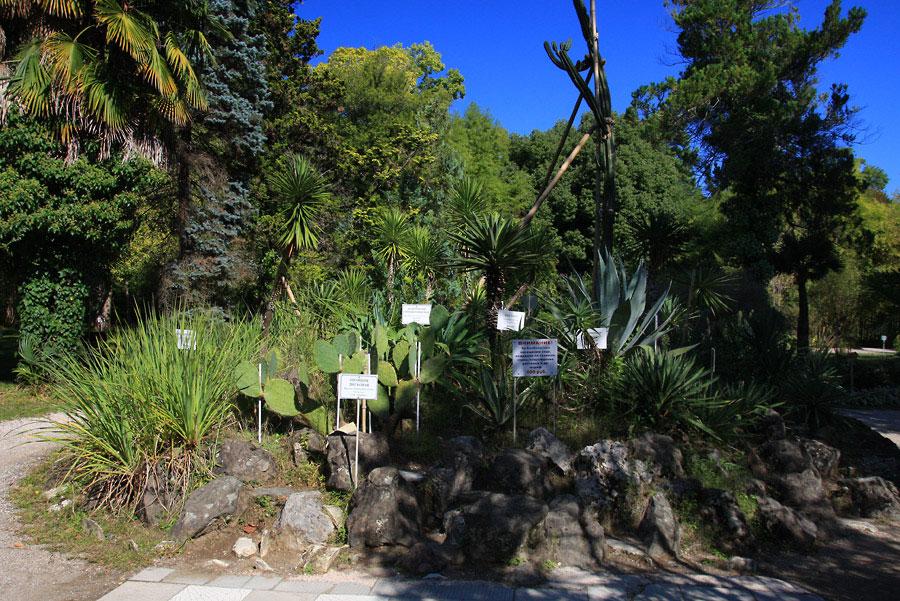 Сухумский ботанический сад фото