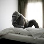 Койот в метро, слон на споте, горилла в постеле. Что еще? Дикие животные в городских местах от Микель Uribetxeberria