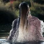 Короткометражный фильм «The Lake» от Pierre Debusschere