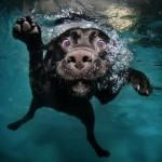 Смешные фотографии животных от легендарного Сета Кастила