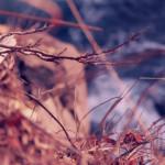 Цунами в Японии: до и после глазами Matthew Brown