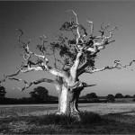 Фото деревьев от знаменитого английского фотографа Tony Howell