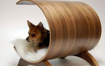 Дизайнерская мебель для собак, а так же стильные миски для собак на подставке