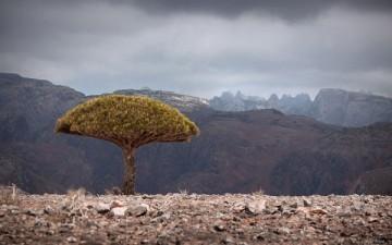 Архипелаг Сокотра — неповторимое очарование уникальной природы