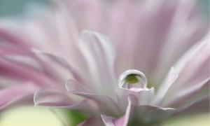 Цветочные фотографии от Aina Apelthun (10)