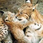 Лучшие зоопарки России: екатеринбургский зоопарк