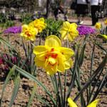 Садово-парковое искусство Симферополя: Ботанический сад ТНУ