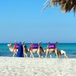 Райский уголок Туниса — остров Джерба