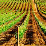 «Темная лошадка»: вина Португалии из региона Байррада